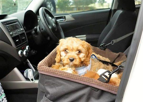 Large Dog Car Seat Happy Pooch